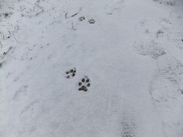 雪の日と日曜日の散歩道_f0210340_3581622.jpg