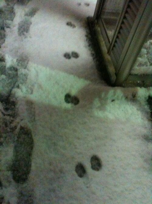 雪だす_b0051654_23512115.jpg