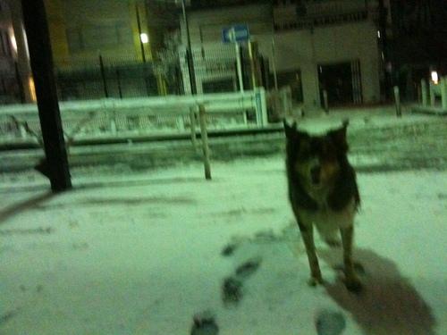 雪だす_b0051654_23513344.jpg