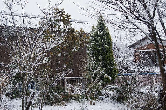 再びの雪景色_e0181373_19435812.jpg