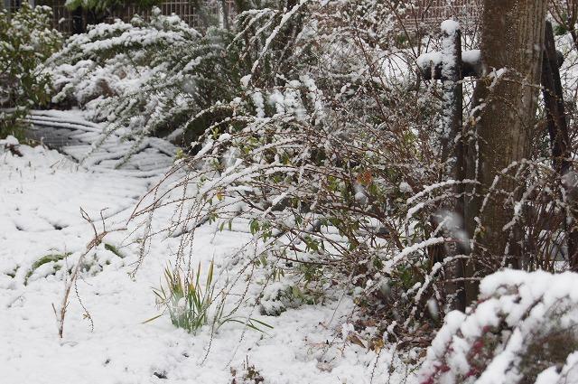 再びの雪景色_e0181373_19441950.jpg