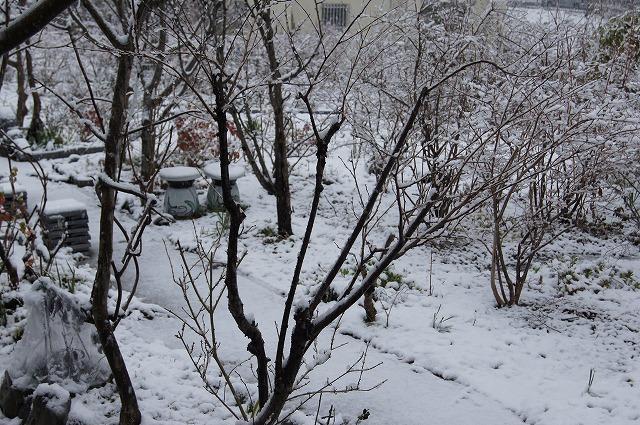再びの雪景色_e0181373_19443559.jpg