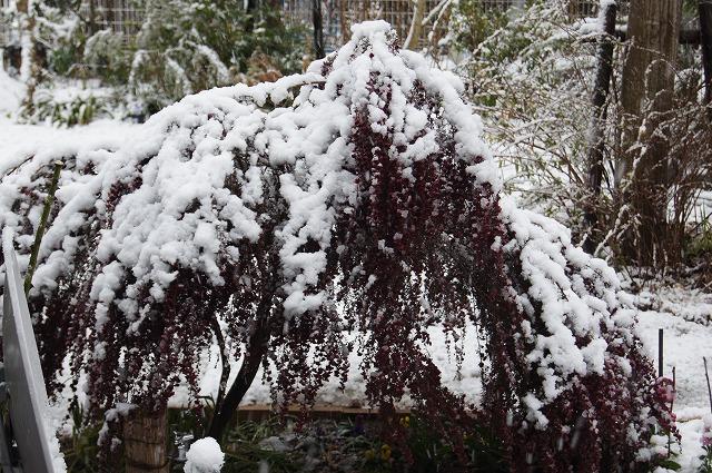 再びの雪景色_e0181373_19445464.jpg