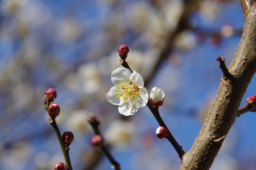 春の兆し_c0005077_049413.jpg