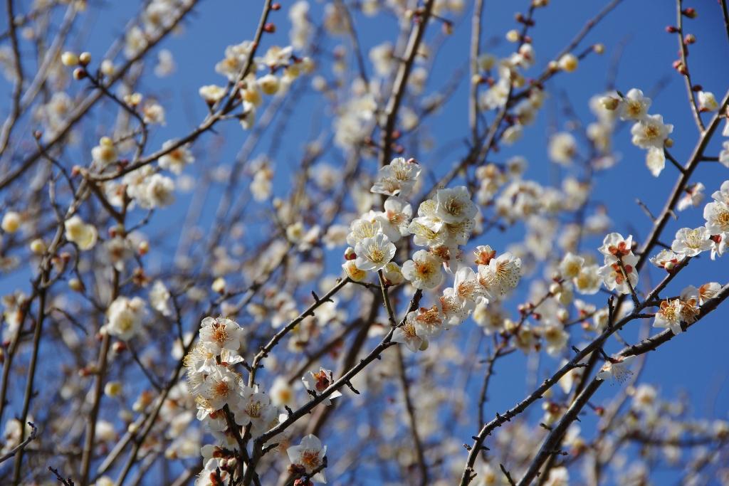 春の兆し_c0005077_0495539.jpg