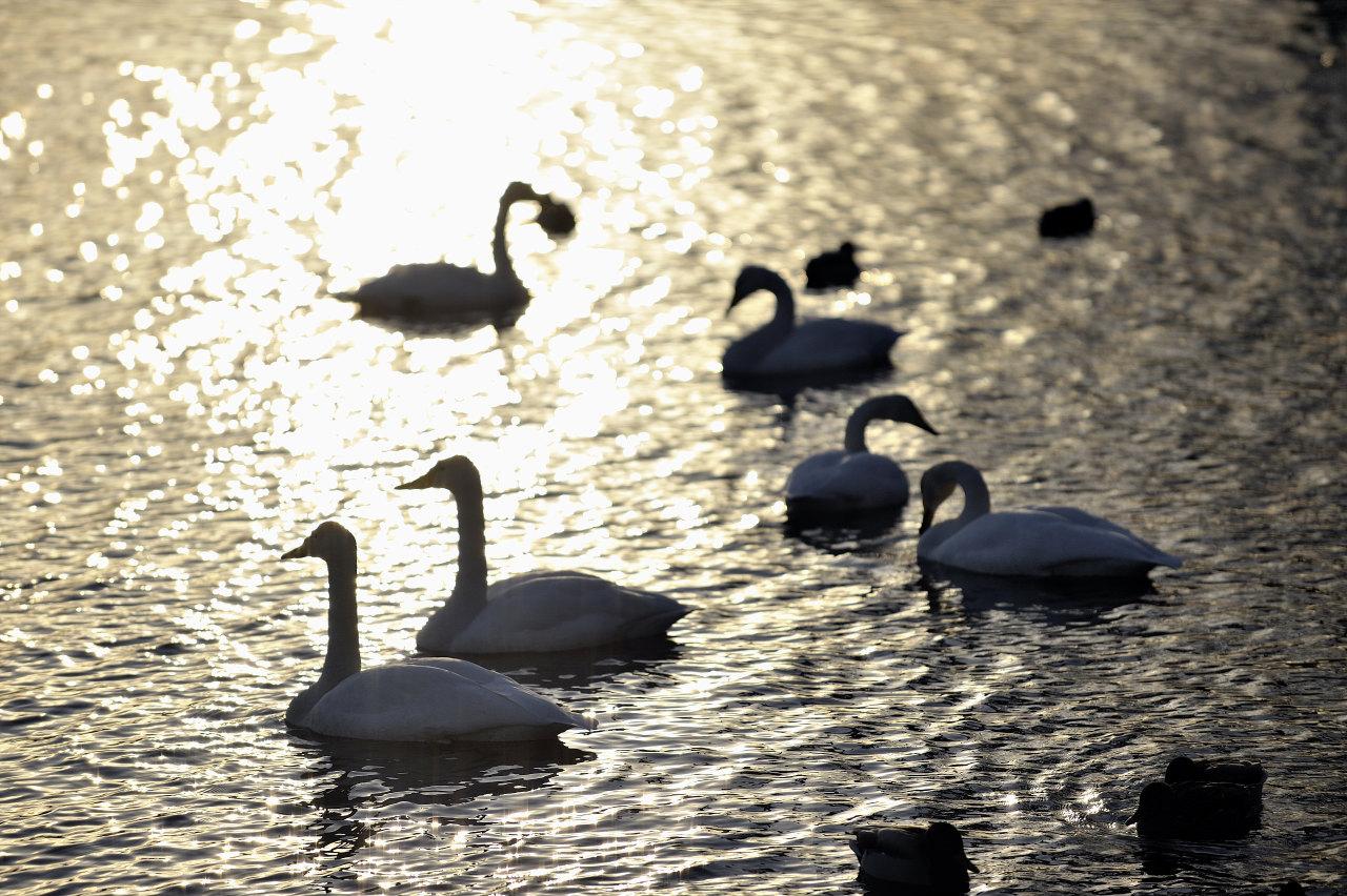 光の中の鳥_e0171886_21181714.jpg