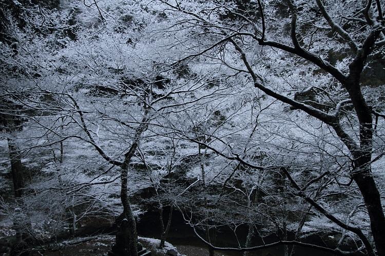雪の西明寺_e0051888_4265611.jpg