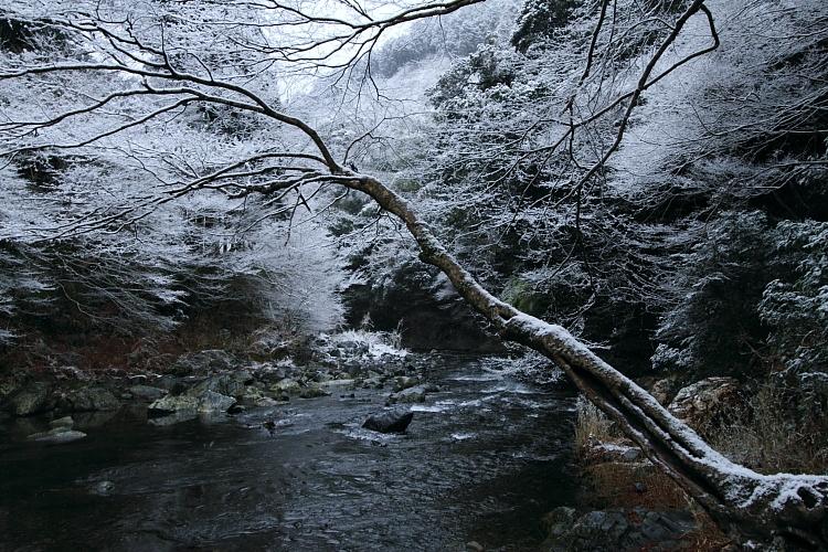 雪の西明寺_e0051888_4325049.jpg