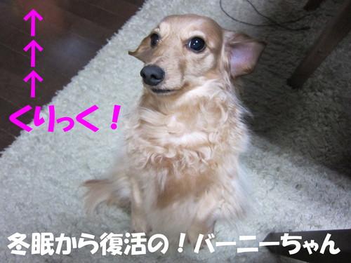 b0200291_1875831.jpg
