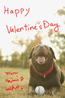 Happy Valentine\'s Day♪_a0066192_3443217.jpg