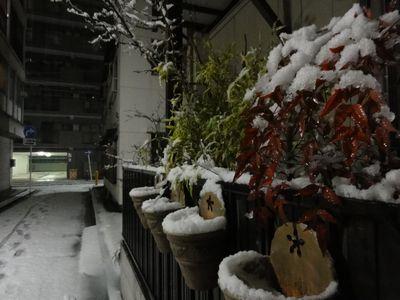 年に1度の大雪_e0149596_2350249.jpg