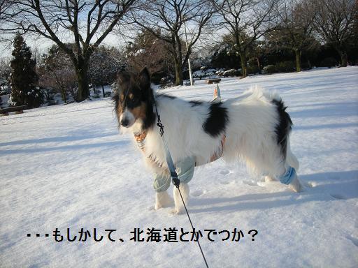 f0081100_22445932.jpg