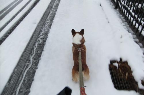 雪積もり 朝からママと 大はしゃぎ_f0101201_21145344.jpg