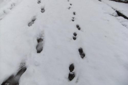雪積もり 朝からママと 大はしゃぎ_f0101201_21163384.jpg