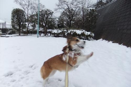 雪積もり 朝からママと 大はしゃぎ_f0101201_21203789.jpg
