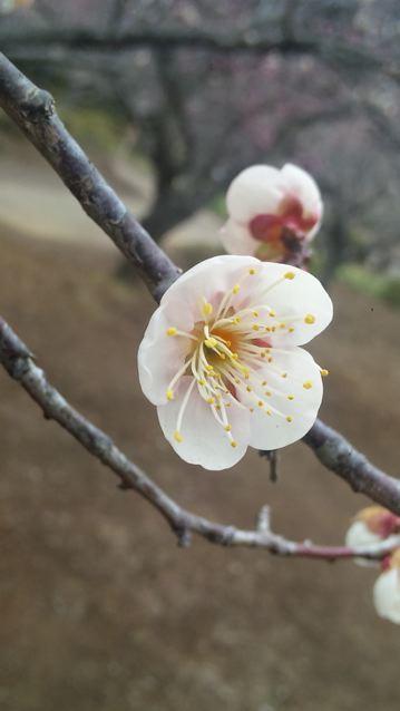 春近し_f0144003_23284791.jpg