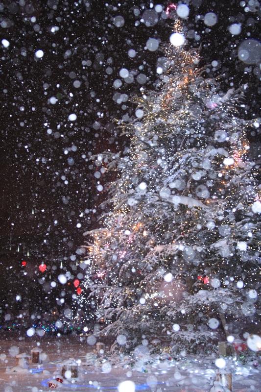 雪のバレンタインデー_f0091207_0515819.jpg