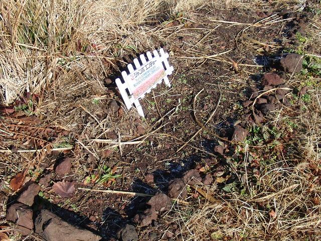 お花見ウォークに備えた滝川の草刈り_f0141310_2120169.jpg