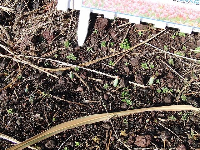 お花見ウォークに備えた滝川の草刈り_f0141310_21202878.jpg