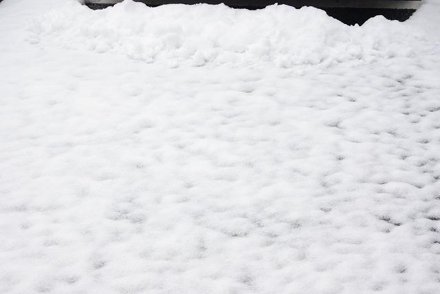 一日限りの積雪_d0147812_1944568.jpg