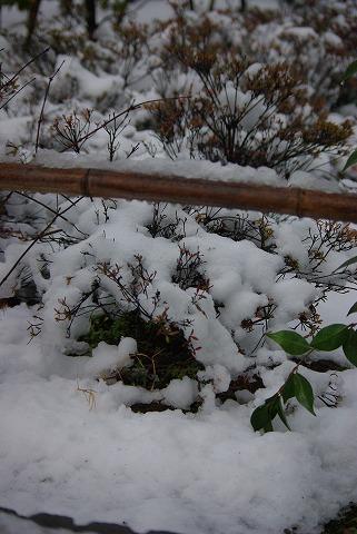 一日限りの積雪_d0147812_1945467.jpg