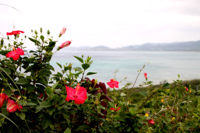 沖縄離島めぐり 石垣島_e0048413_1456691.jpg