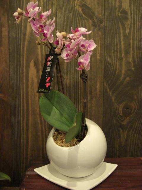 かわいい蘭の花_f0226713_20292119.jpg