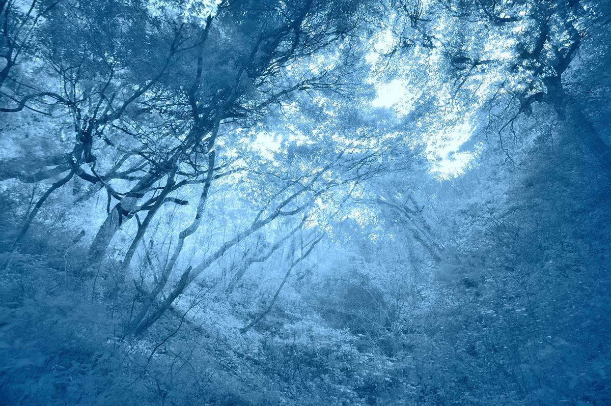 Whisper Forest_a0059621_17564849.jpg