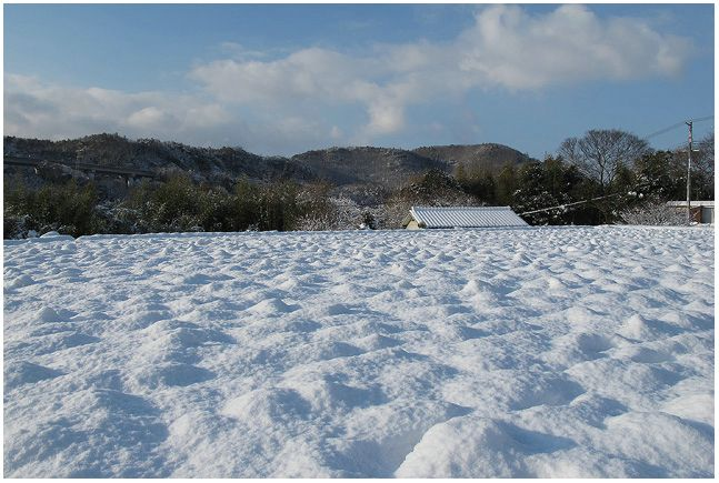雪の朝_c0042324_10174425.jpg