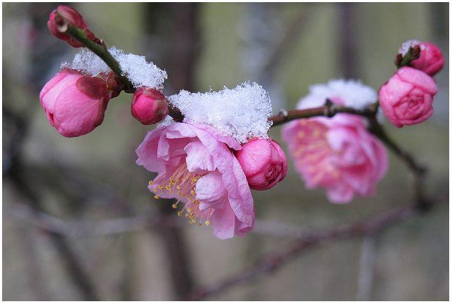 雪の朝_c0042324_10185180.jpg