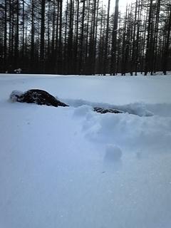 雪、深っ!_f0148927_15213048.jpg