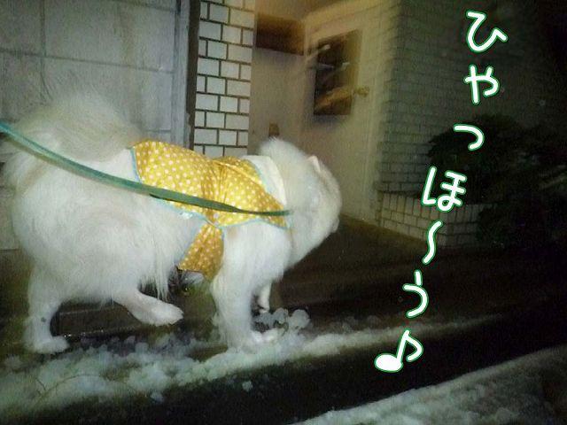 待ちに待った雪!_c0062832_1622242.jpg