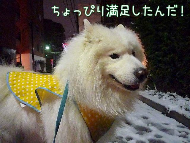 待ちに待った雪!_c0062832_16224623.jpg
