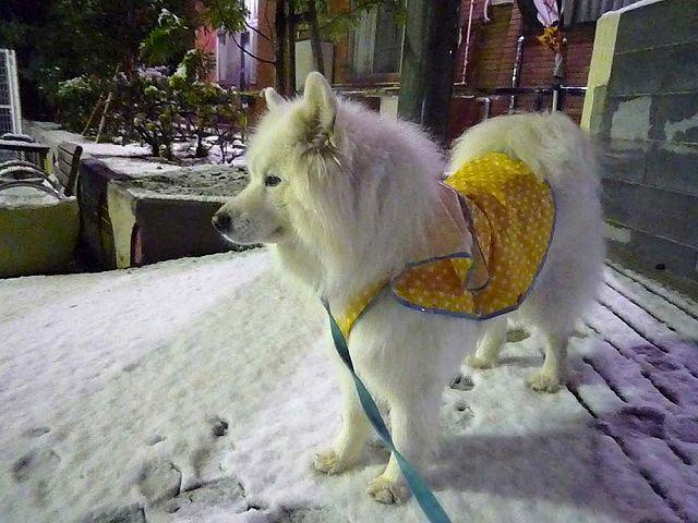待ちに待った雪!_c0062832_1622995.jpg