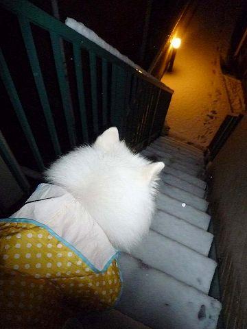 雪だ!_c0062832_3424665.jpg