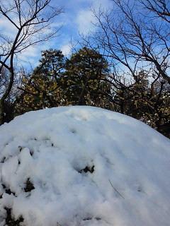 春の雪景色_e0085133_11215169.jpg