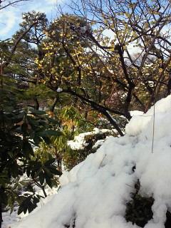 春の雪景色_e0085133_11223697.jpg