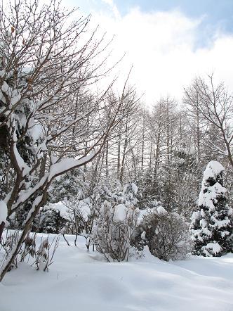 雪や_a0156039_10124721.jpg