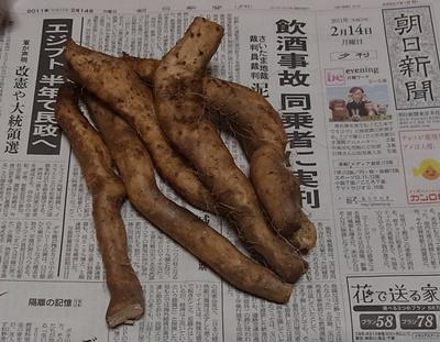 折れた自然薯