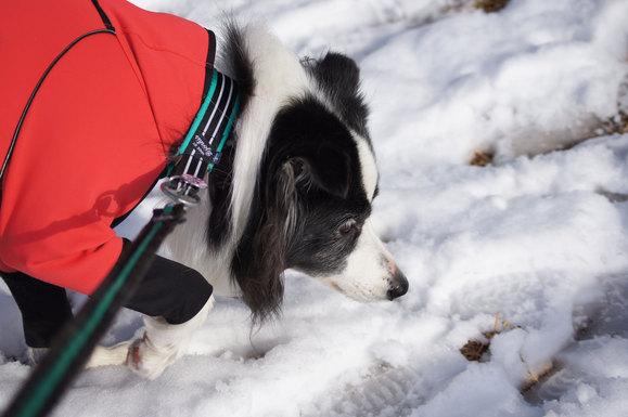 雪のお散歩_e0232343_16283878.jpg