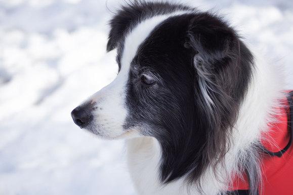 雪のお散歩_e0232343_16295967.jpg