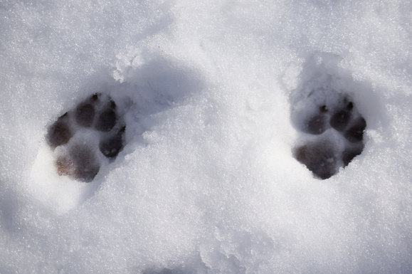 雪のお散歩_e0232343_1631933.jpg