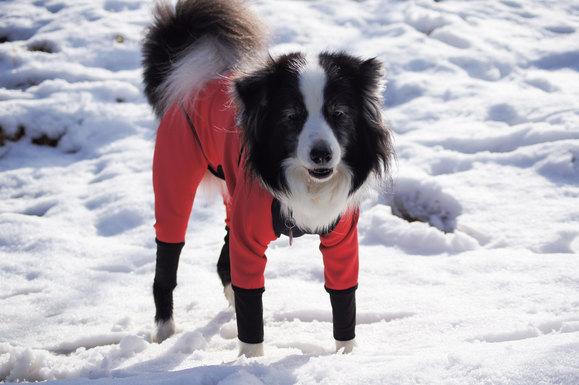 雪のお散歩_e0232343_16331742.jpg