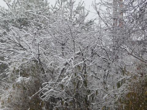 【2月14日(月)】雪…。_c0221349_1581520.jpg