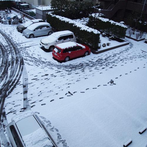 雪の朝_a0003650_11435773.jpg