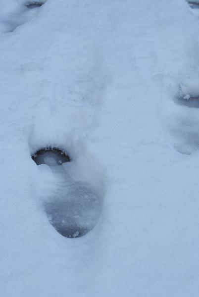 雪の朝_a0003650_1144139.jpg