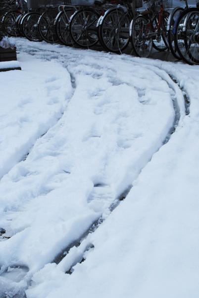 雪の朝_a0003650_11451651.jpg