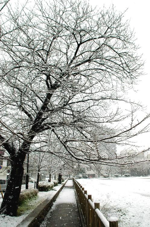 和歌山市にも雪が!_b0093754_23405020.jpg