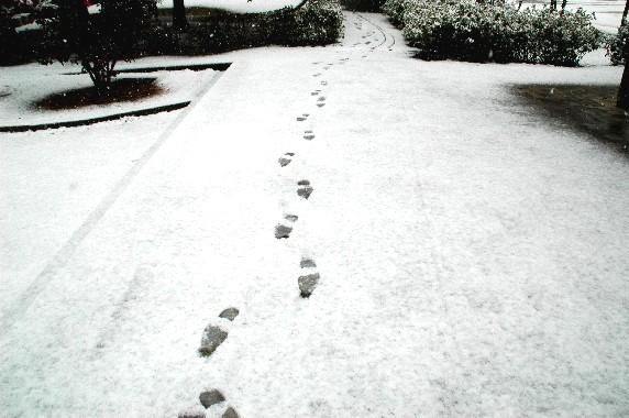 和歌山市にも雪が!_b0093754_23405941.jpg
