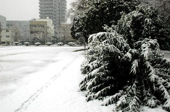 和歌山市にも雪が!_b0093754_23411931.jpg